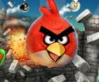 Ausnahmespiel: Angry Birds mega erfolgreich