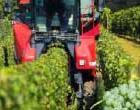 Der Weinanbau-Simulator kommt