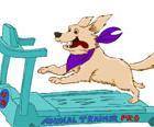 Tierische VIPs – Wellness für 4 Pfoten