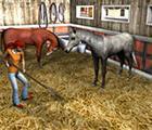 2in1 für Nintendo DS: Mein Gestüt + Mein Gestüt – Ein Leben für die Pferde